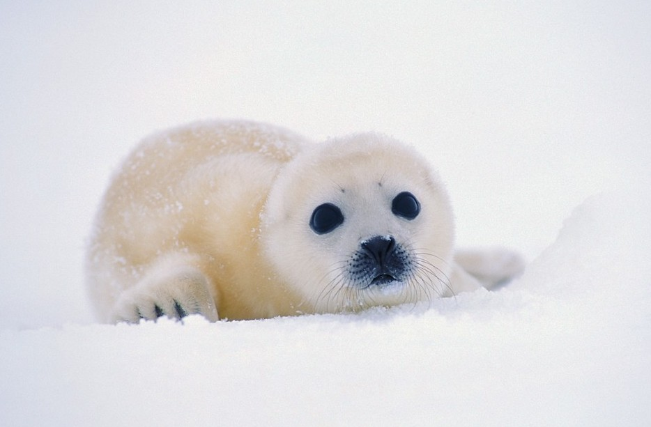 Seal Protection Action Group » Blog Archive » Russia ...