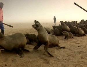 Namibian seal hunt