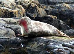 Shot seal